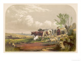 Drover and His Donkey Leads His Sheep and Cattle to Graze on Common Land Giclee Print by F. Lydon