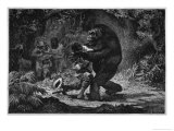 The Gorilla Does Not Go out of Its Way to Attack Men Giclee Print by Adrien Marie