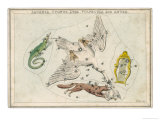 Lizard Swan Lyre Fox and Goose Star Constellation Giclee Print by Sidney Hall