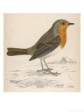 Erithacus Rubecula Giclee Print by Reverend Francis O. Morris
