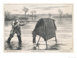 Shooting Wildfowl with the Aid of a Stalking Horse Giclee Print by W.j. Palmer