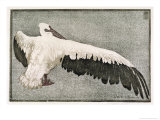 Pelican with Outspread Wings Premium Giclee Print by Walther Klemm
