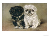 Black and a White Pekingese Puppy Sit Close Together Giclee Print by P. Kirmse