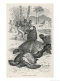 Hunting Green Turtles Giclee Print by Robert Kretschmer
