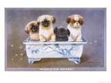 Four Pekingese Puppies Sitting in a Chinese-Style Ceramic Bowl Giclee Print by A. E. Kennedy