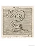 Draco the Dragon Giclee Print by Gaius Julius Hyginus