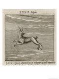 Lepus the Hare Giclee Print by Gaius Julius Hyginus
