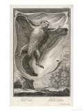 Flying Squirrel Sciuridae Pteromys or Sciuropterus Giclee Print by I.g. Pintz