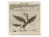 Aquila the Eagle Giclee Print by Gaius Julius Hyginus