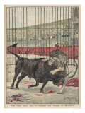 Bull and Lion Fight Giclee Print by Alfred Pronier