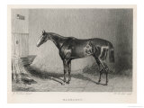 Portrait of the Racehorse Harkaway Who Won the 1838 Goodwood Cup in His Stable Giclee Print by W.b. Scott