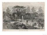 The Old Physick Garden Chelsea London Giclee Print