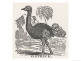 Profile View of an Ostrich Within a Landscape of Hills and Palm Trees Lámina giclée por Laura Marshall