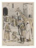 Lorenzo di Medici Ruler of Florence Receives an Unexpected Gift from Egypt Giclee Print
