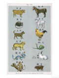 The 12 Creatures of the Chinese Zodiac Positioned in Opposing Pairs Reproduction procédé giclée