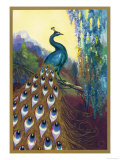 Ornamental Peacock Giclee Print
