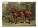 "Great-Grandson of ""Darley Arabian"" Raced 1769-1770 in 18 Races All of Which He Won Giclee Print"