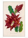 Cactus JenkinsonII Giclee Print
