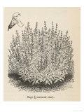 Sage Bush Giclee Print