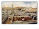Cattle Awaiting Slaughter in the Union Stock Yards Chicago, Note the Boards for Armour and Swift, Giclee Print