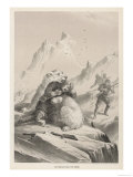Polar Bear Seizes Dr. Borgen of Koldewey's Arctic Expedition Giclee Print
