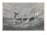 Sperm Whale Attacked Giclee Print