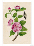Camellia and Insect Giclee Print