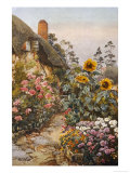 Anne Hathaway's Cottage and Garden. Packed Herbaceous Borders Lead up to the Cottage Giclee Print