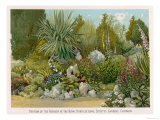 Portion of the Rockery at the Royal Horticultural Society's Gardens Chiswick Giclée-Druck