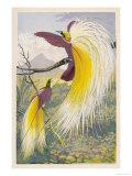 Oiseau de paradis Reproduction procédé giclée