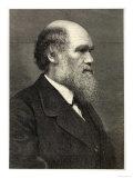 Charles Darwin Naturalist Reproduction procédé giclée