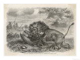 He is Attacked by a Lion Which Shakes Him as a Terrier Shakes a Rat Giclee Print
