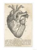 Anatomie van het hart, doorsnede met Engelse tekst Gicléedruk