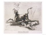 Bull Baiting Bred for This Sport Giclee Print