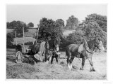 Harvesting in Kent with a Pair of Shire Horses Giclee Print