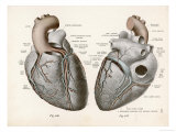 Two Views of the Heart with the Parts Labelled in Latin Giclee Print