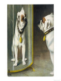 Bulldog Admires Its Reflection in a Distorting Mirror Giclee Print