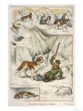 St. Bernard Dog Giclee Print