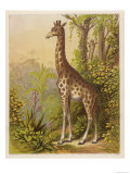 Standing Tall in the African Jungle Giclee Print