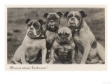 Group of Four Bulldogs Sitting Close Together Giclee Print
