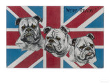 Patriotic British Bulldogs: We're Ready! Giclee Print