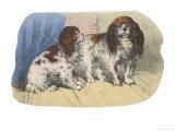 King Charles Spaniel, Blenheim Giclee Print