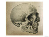 Illustration of the Skull of a Bushman of the Hottentot Tribe Africa Giclee Print