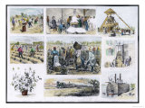 Various Stages of Cotton Processing Giclee Print