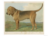 Fine Profile of This Classic Breed as It was in the 19th Century Giclee Print