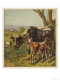 Cattle and Sheep in a Field Giclee Print