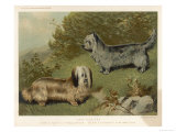 Two Isle of Skye Terriers One Drop-Eared the Other Prick- Eared Giclee Print