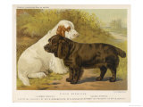 Clumber Spaniel and a Sussex Spaniel Premium Giclee Print