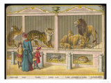 Regent's Park Zoo London Visitors Admire Lions Tigers and Other Cats Giclee Print