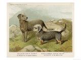 Dandie Dinmont Terrier with a Bedlington Terrier Giclee Print